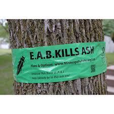 EAB kills ash